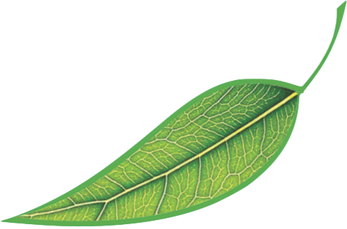 Leaf-clear background